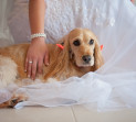 Pet Friendly Wedding Photographer Brisbane